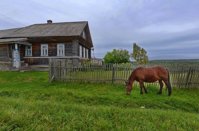 Деревня Бердово и местная живность.