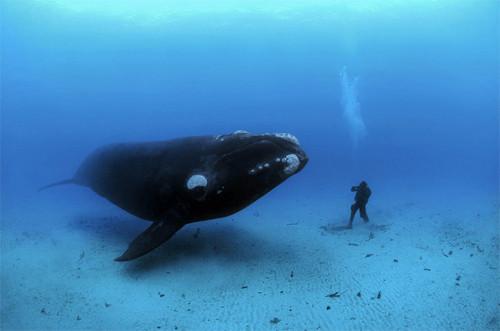Синий кит добрался до Чечни !!