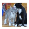 cats_tag_miniature