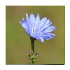 plants_tag_miniature