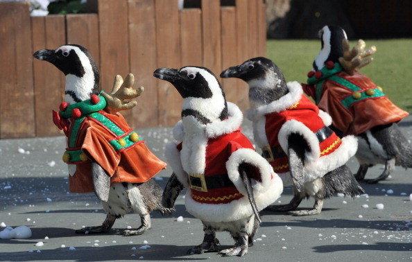 chi-penguins-santa-claus-costumes-20131217