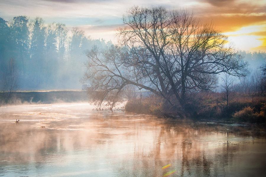 Дерево на берегу реки Пехорка