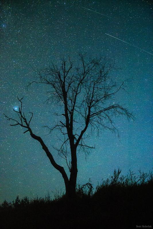 Придорожное дерево и ночное небо, удалось поймать метеор