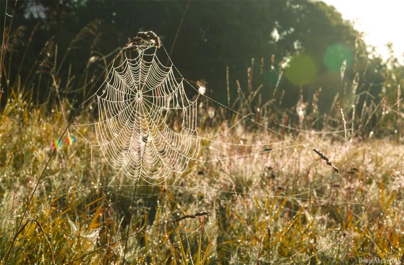 Паутинка в утреннем свете