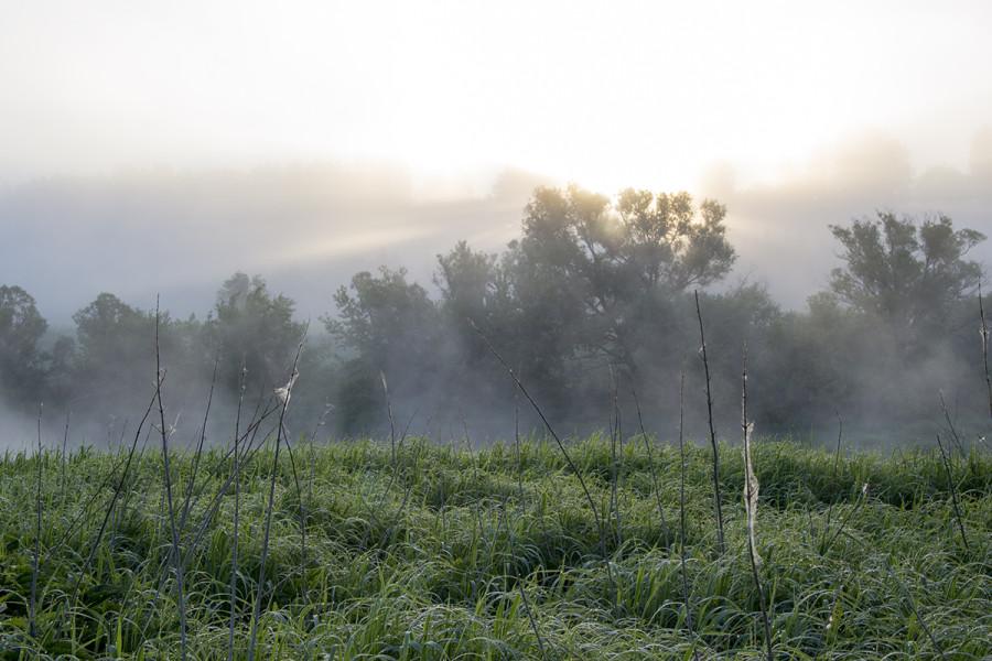Туманный рассвет на Оке