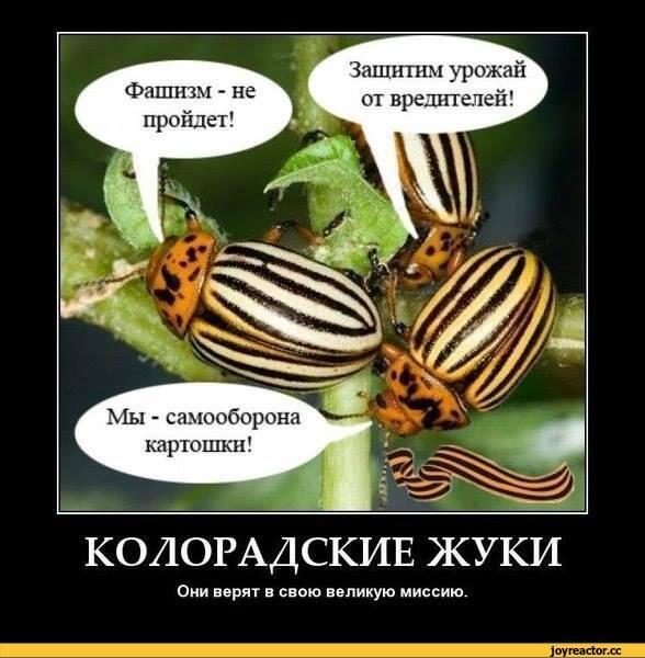 политика-песочница-политоты-колорады-демотиватор-1204755