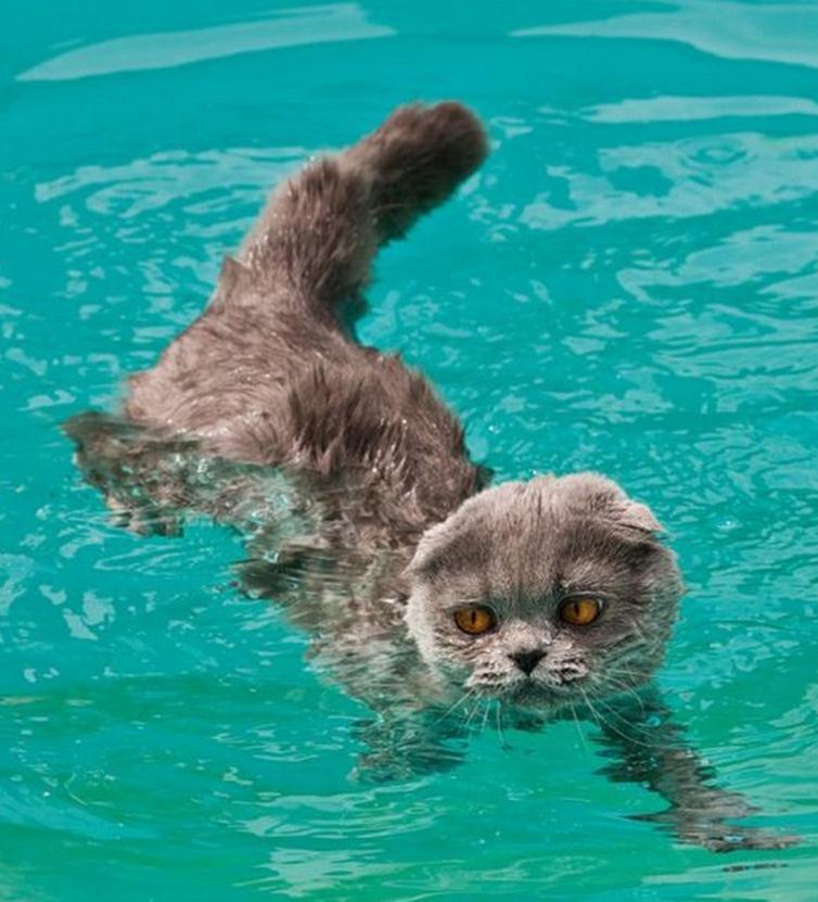 zwemmende_katten-2