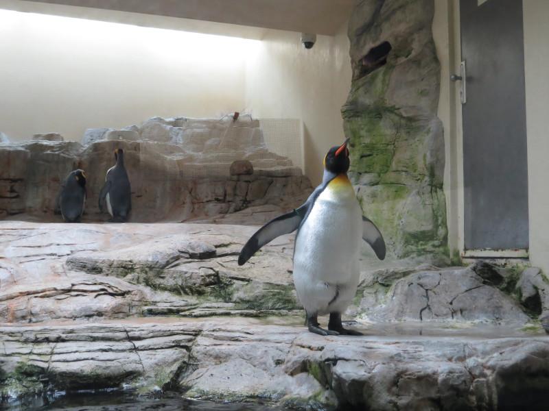 Люблю пингвинов)