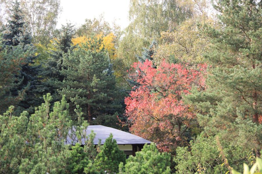 Японский сад 414