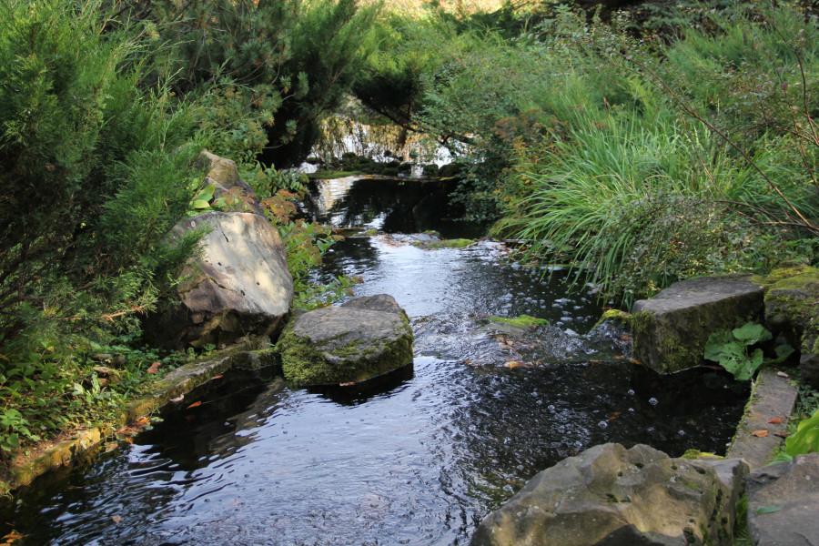 Японский сад 187