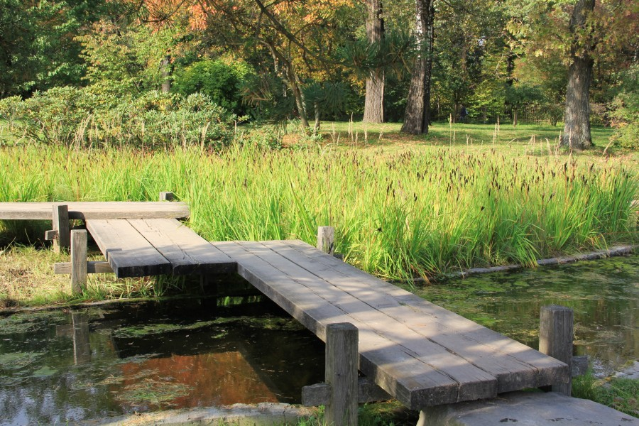 Японский сад 245