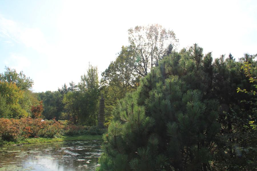 Японский сад 247