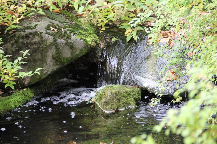 Японский сад 440