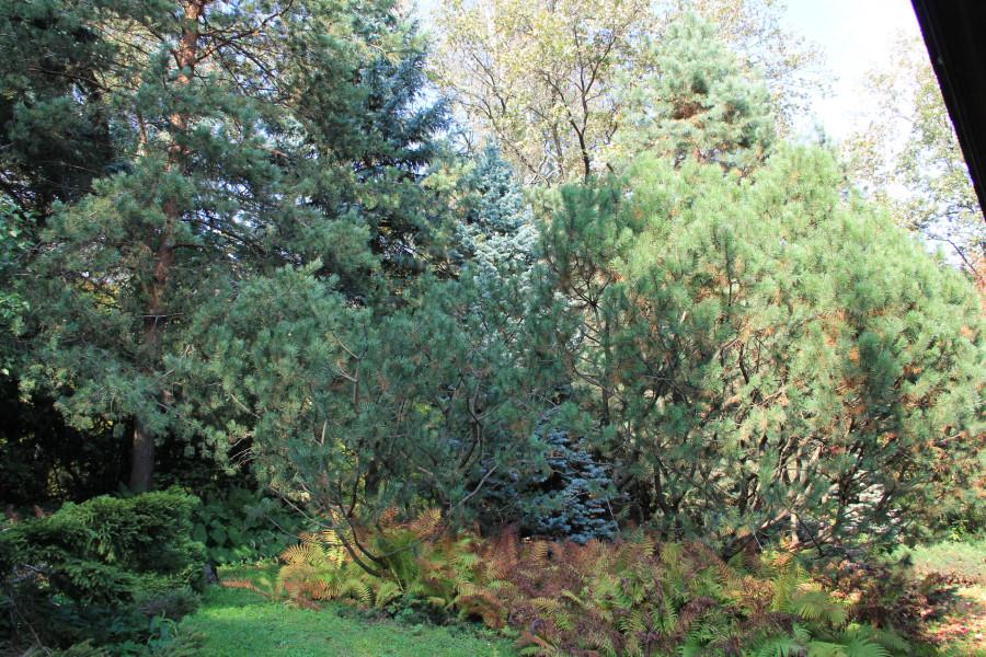 Японский сад 179