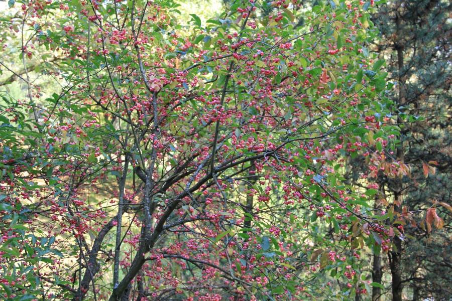 Японский сад 199