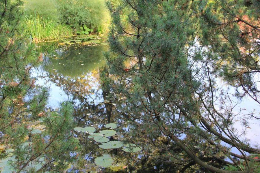 Японский сад 209