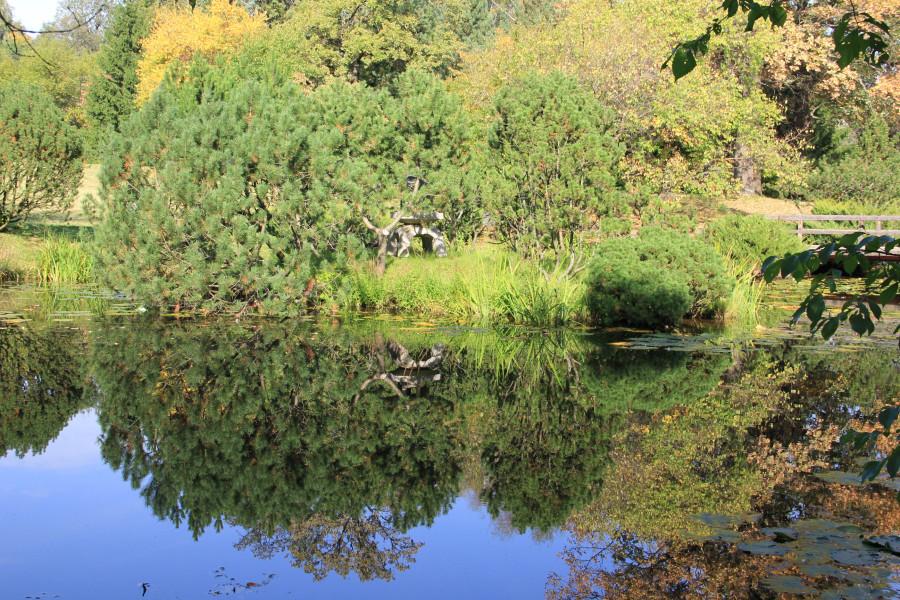 Японский сад 212