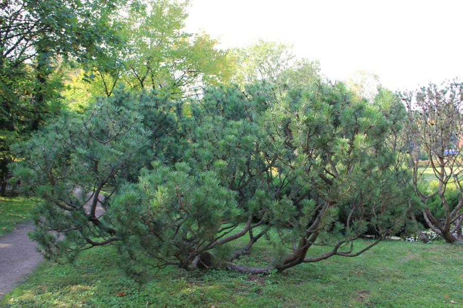 Японский сад 215