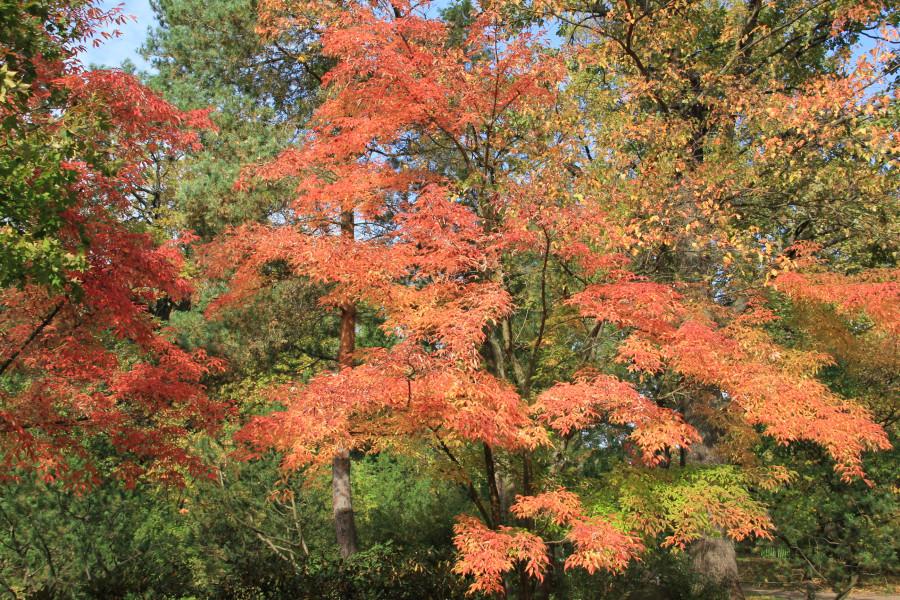 Японский сад 276