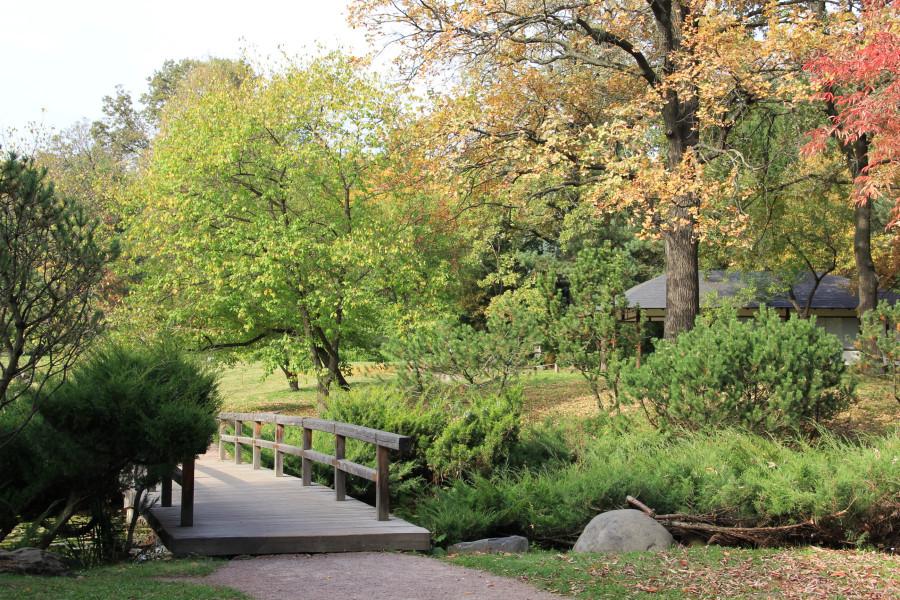 Японский сад 286