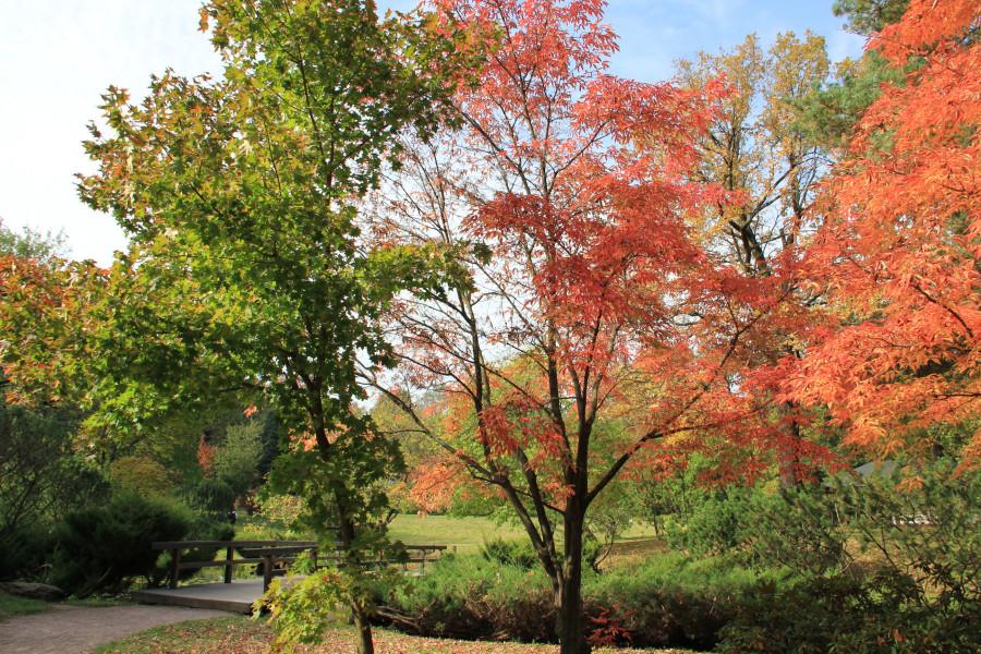 Японский сад 301