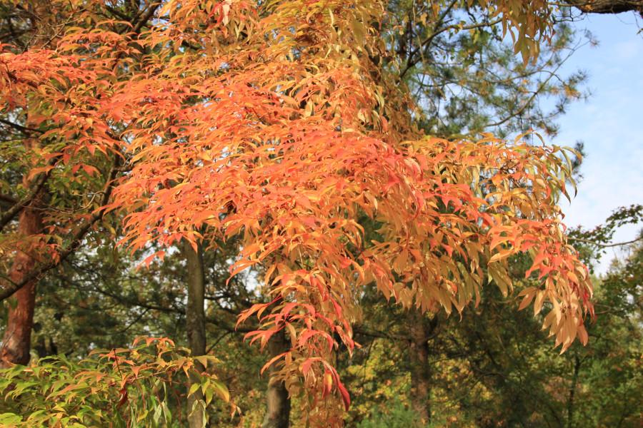 Японский сад 307