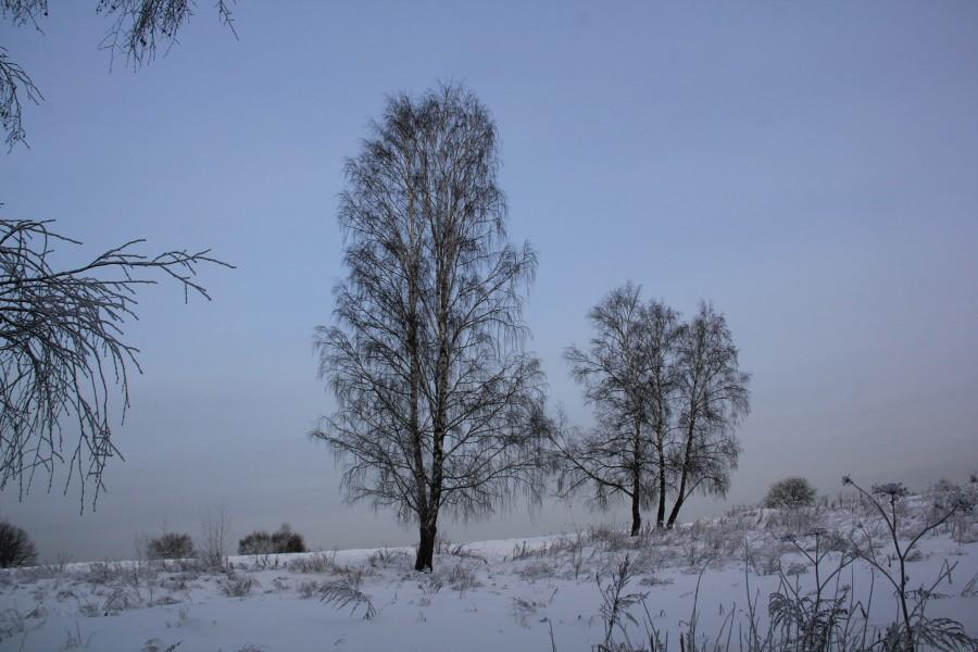 Мороз 449