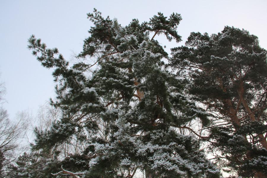 Мороз 433