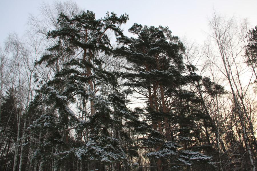 Мороз 436