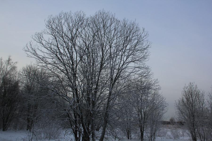 Мороз 421