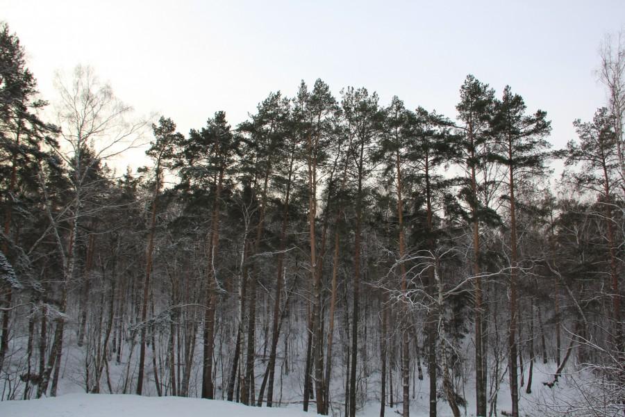 Мороз 458
