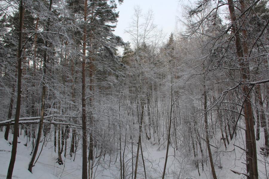 Мороз 527