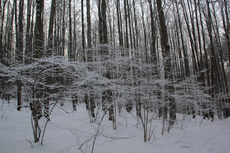 Мороз 530