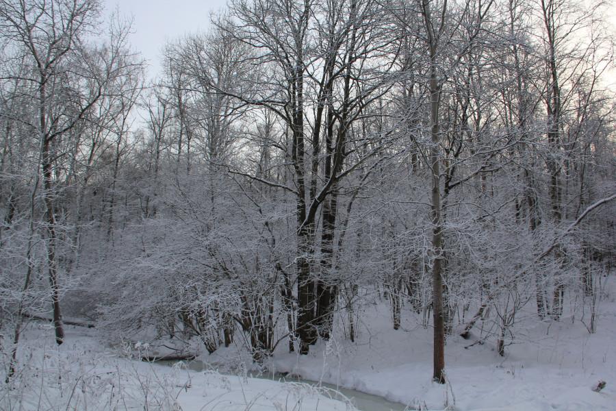 Мороз 540