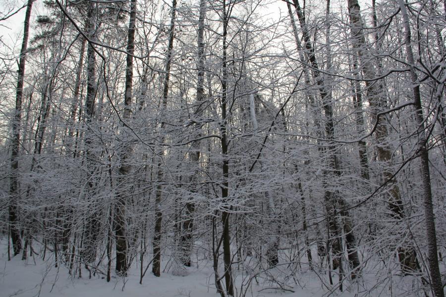 Мороз 554