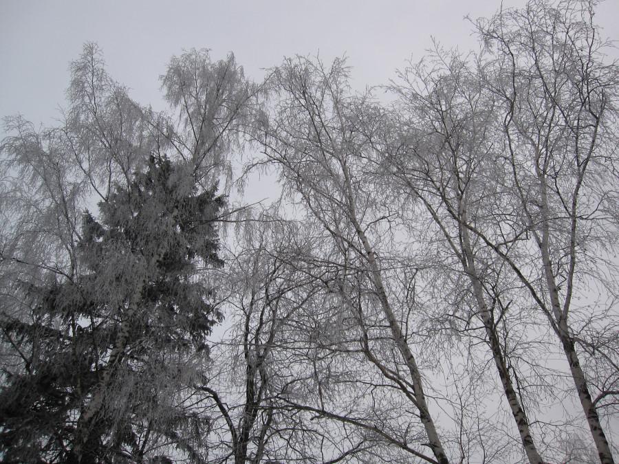 лес 005