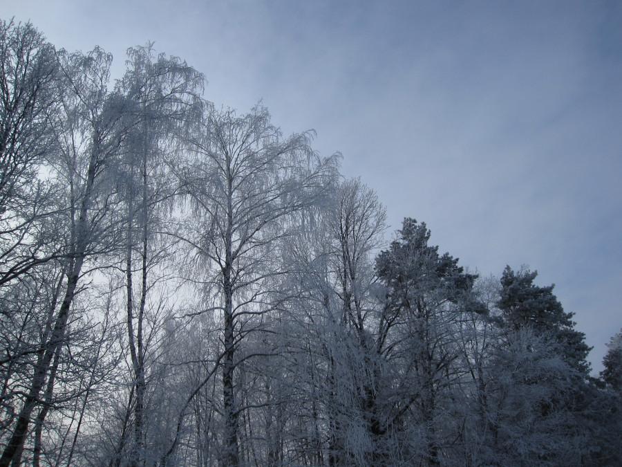 Лес Зима 001