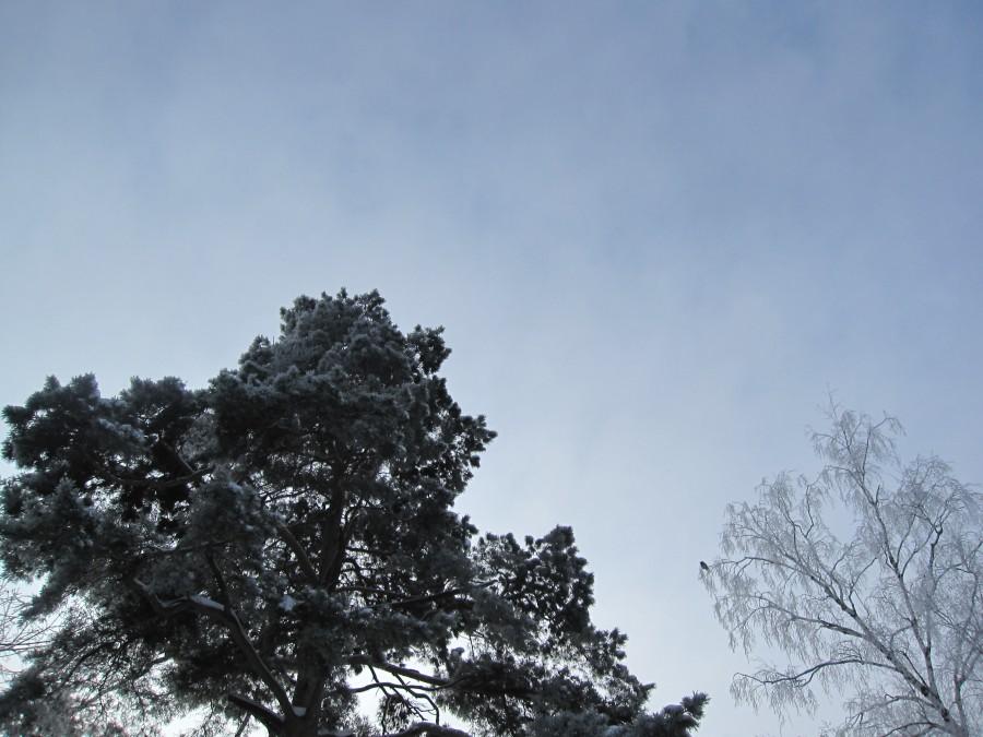 Лес Зима 005
