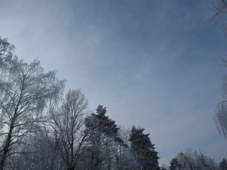 Лес Зима 004