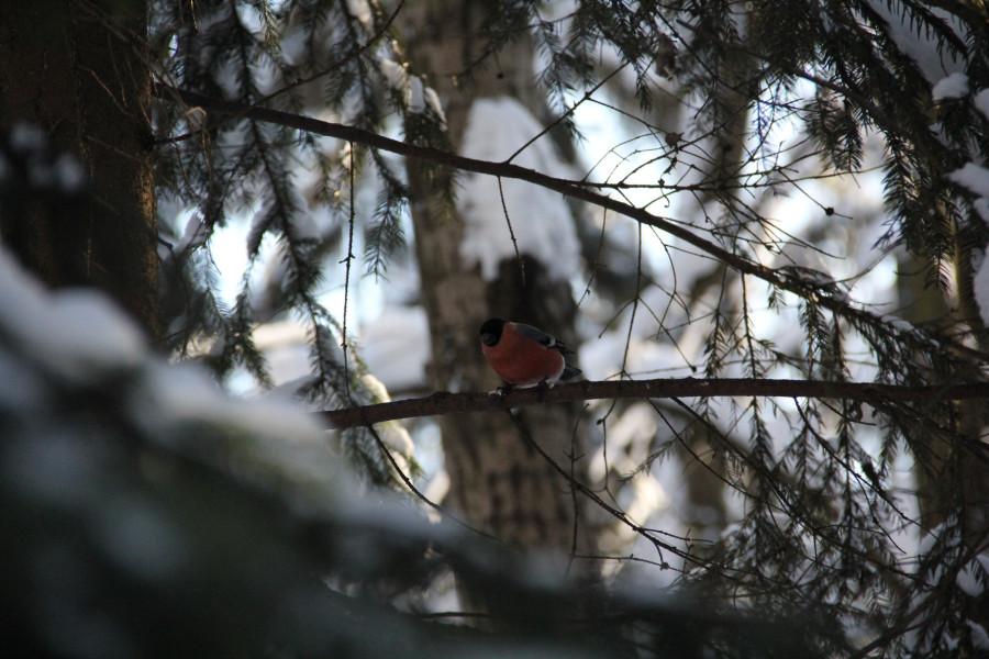 лес. птицы 095