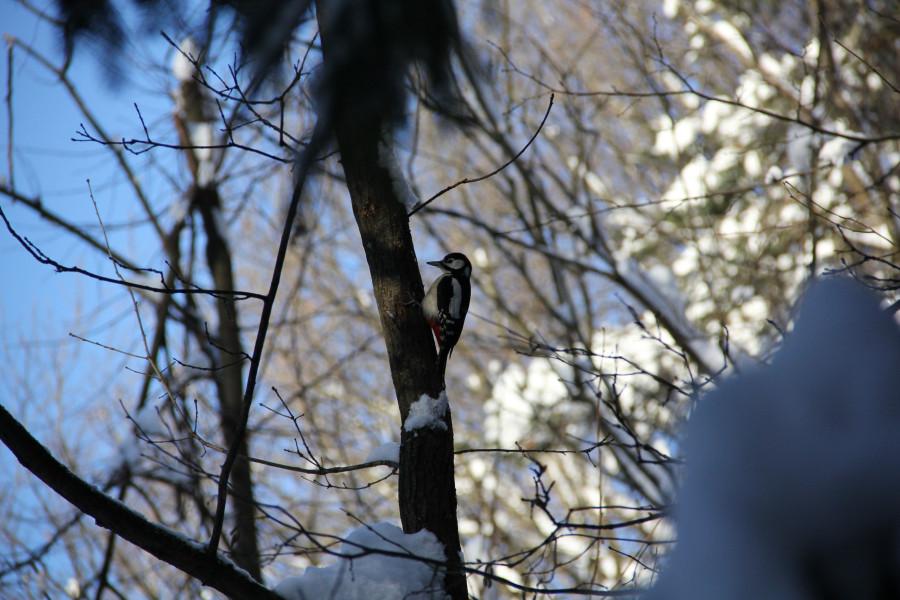лес. птицы 122