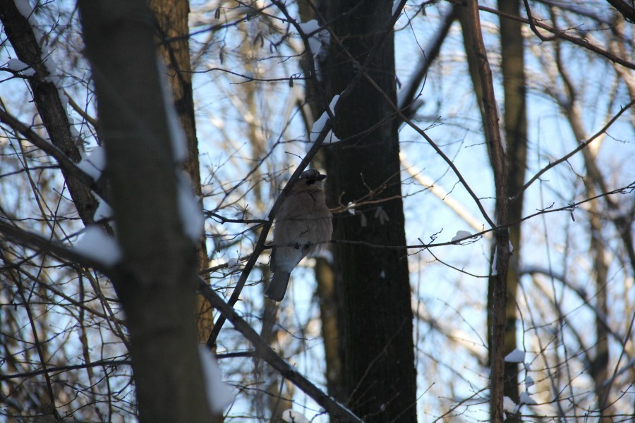 лес. птицы 167