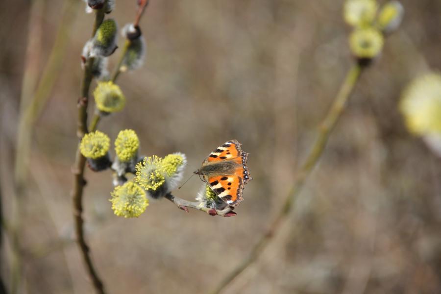 Весна. Зюзинский парк 398
