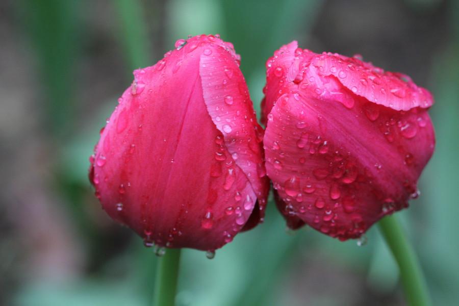 Весна. Макро 473