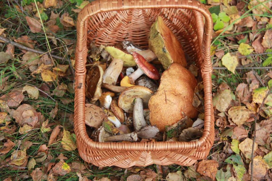 Серпухов, по грибы 736