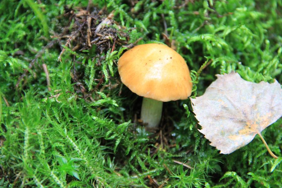 Серпухов, по грибы 173