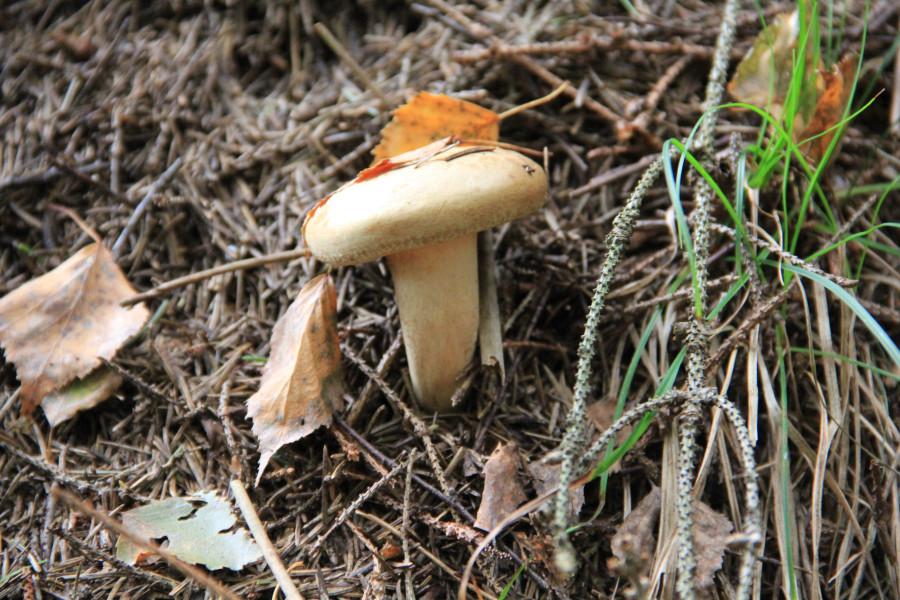 Серпухов, по грибы 195