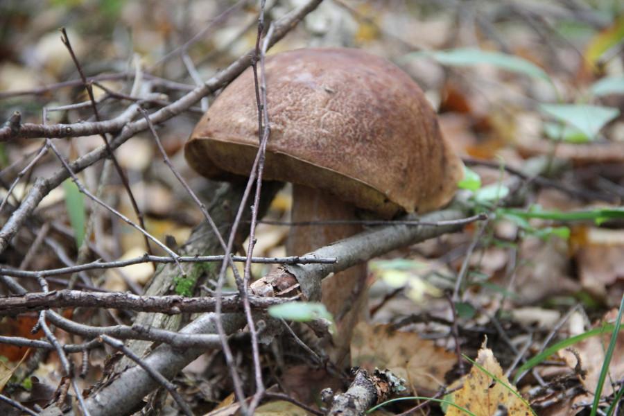 Серпухов, по грибы 247
