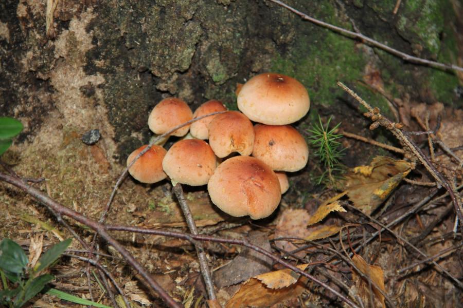 Серпухов, по грибы 252