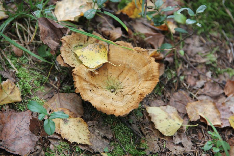 Серпухов, по грибы 260